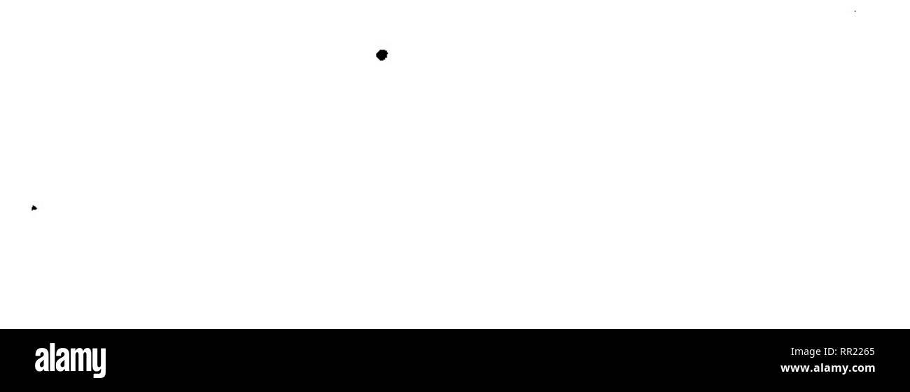 """. Catálogo sistemático de toda la fauna de Filipinas conocida hasta el presente. Zoology. — 401 —, A. calcar, Lwn, SysL Nat, ed. x, p. >6á: ¿V^. í^b. 1, a3» fv ^; Concha Icón. f. 52 c; Specimen; Ad, Gen, // p. 398; ^^^% 10, p. 231, laoi. 52, figs. if, 29, 30; lam» 56, %, 74; /»<»<^* ^^A p- 540. Hab, Cebú; Java, O. Indico, Australia, N."""" Caíedonia. 36. A. var. lacimatuxn, Gould, (M. S. IV) Goul^y Bost, Proc, 184^^ p, 90; Ü. S ÍLccpL Exped. 1. 12, t 204; 6V?^. Vív. 1. 79^ f. 3; Wilkes^ Exped, Molí, I, 12, f. 204; Tryon, iS, p. 232, lam. 53, figs. 32, 2^y^ PaeUly p. 54», ^¿7^. Ceb - Stock Image"""