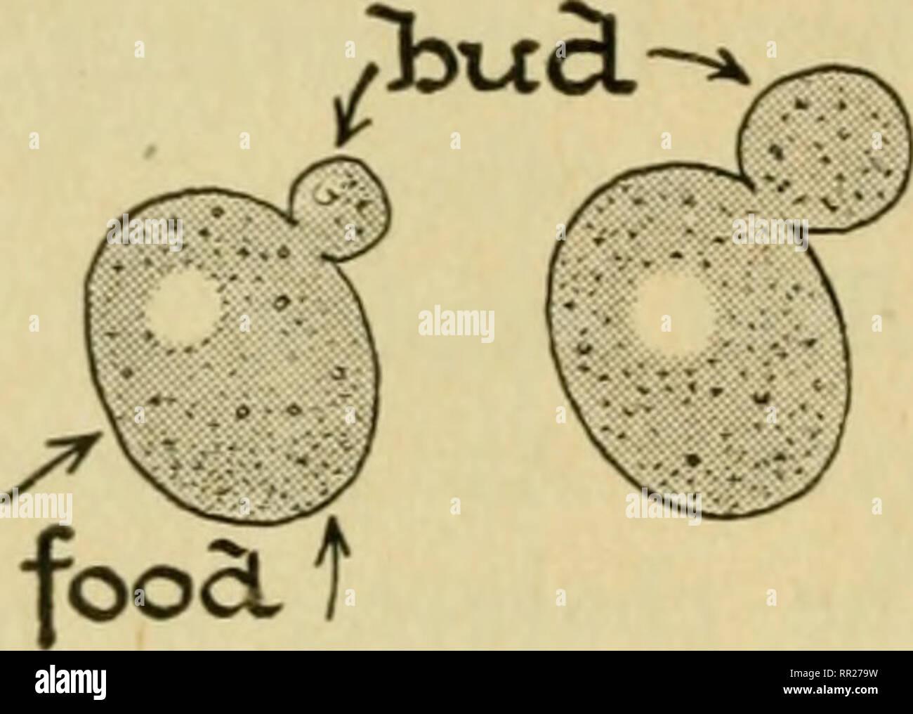 Advanced biology  Biology