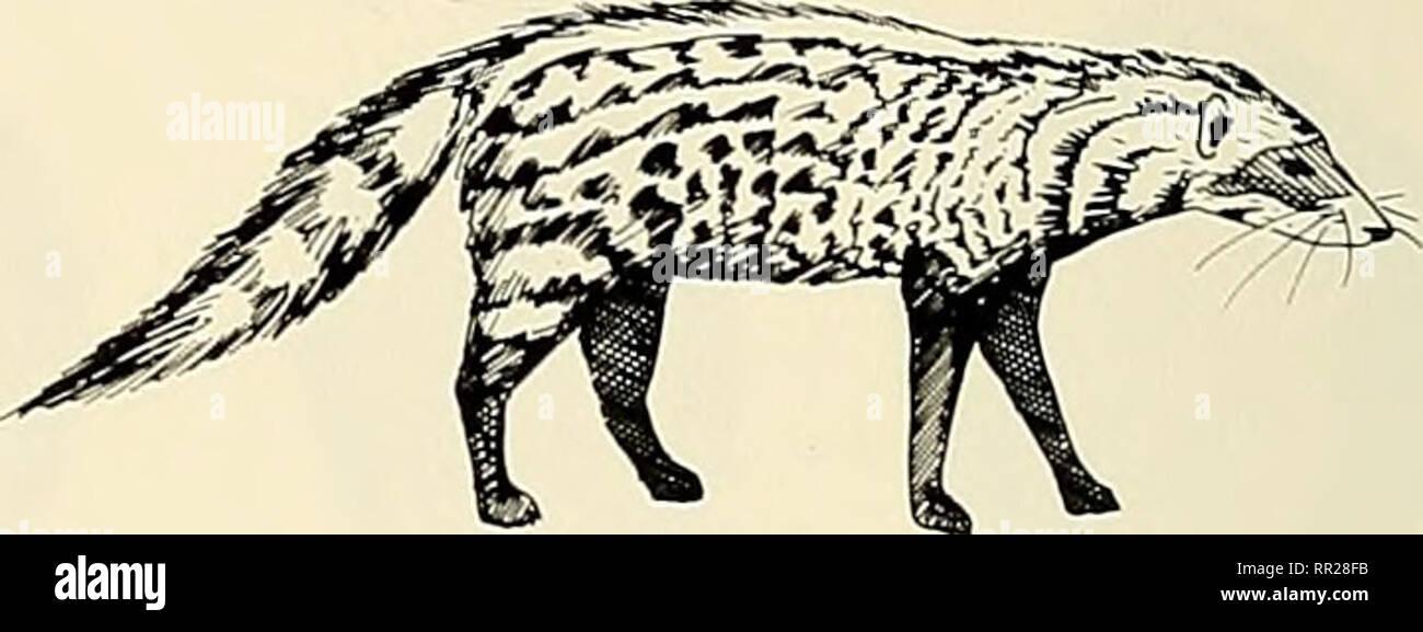 Advances in the study of mammalian behavior. Mammals. Fig. 7 ...