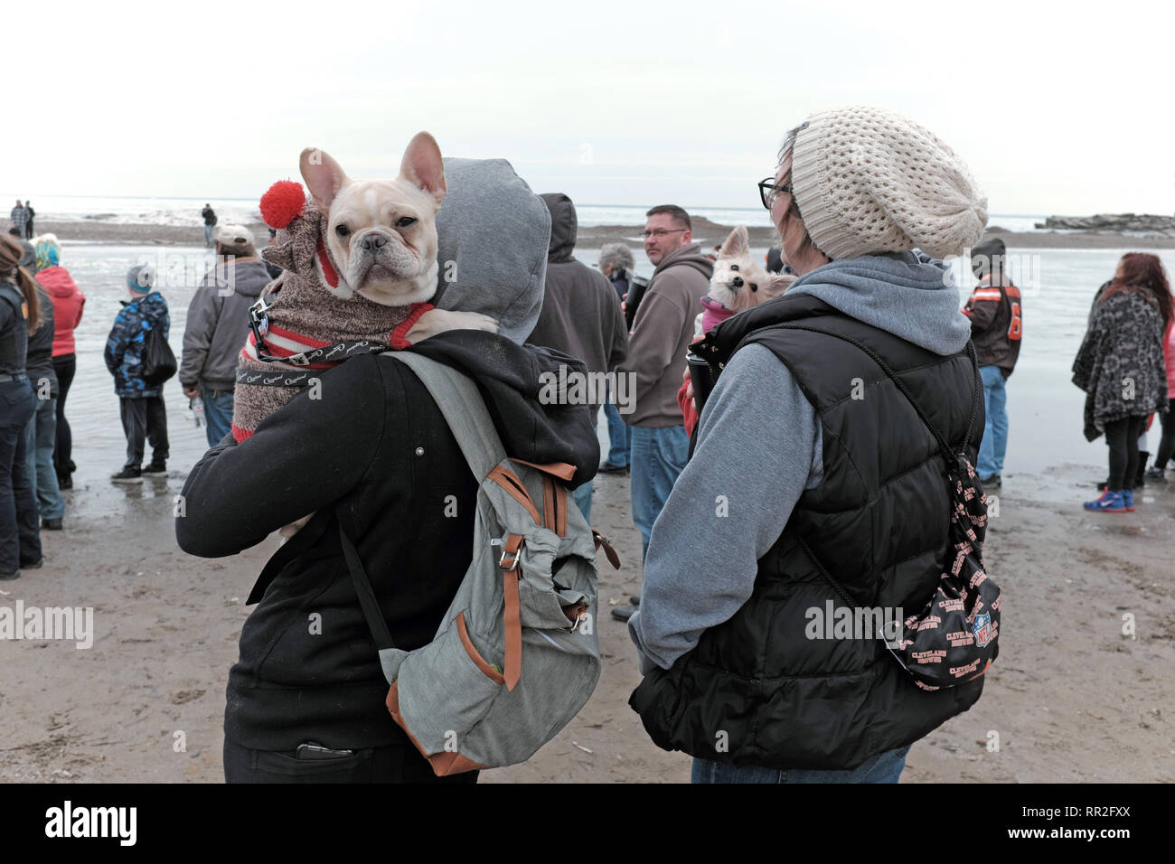 Cleveland, Ohio, USA. 23rd Feb, 2019.  Spectators and their pooches brave the winter cold to watch participants plunge into the ice-filled waters of Lake Erie.  The 2019 Cleveland Polar Plunge benefits the Special Olympics with this years event raising over $94,000 by more than 400 people. Credit: Mark Kanning/Alamy Live News. - Stock Image