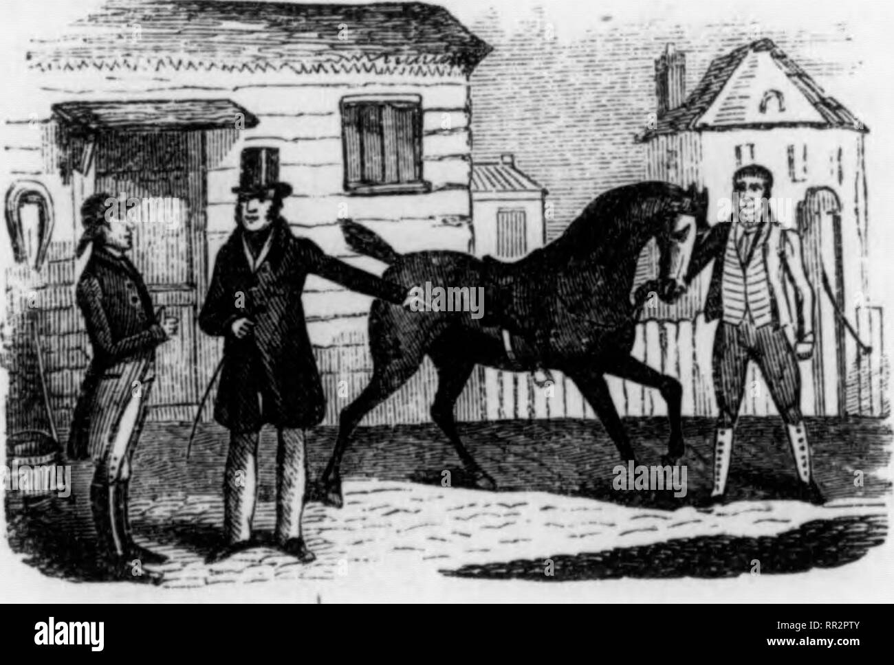 """. The adventures of a gentleman in search of a horse. Horses. 10 THE ADVENTURES OF A GENTLEMAN advertisements of the papers. Cobs, hunters, and hacks, were as plentiful as blackberries in Septem- ber. The difficulty was only where to choose. *' The neatest little cob in London,"""" """" the best hack that ever was mounted,"""" """" that well-known hunter Tantivy, equal to fifteen stone up to any hounds,'* all offered themselves to my delighted eyes: and away I went, to try them all and buy the best. My reader must excuse me for a little digression, to give him some account of myself, s - Stock Image"""