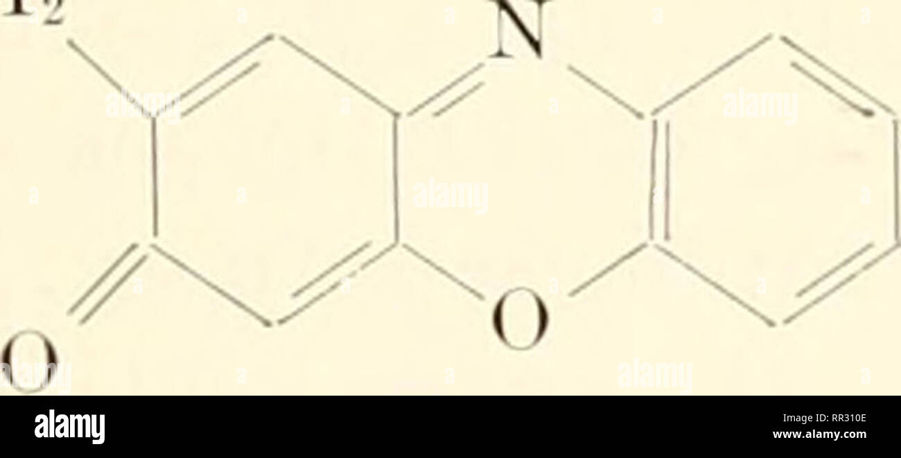 . The actinomycetes. Actinomycetales. CHEMICAL NATURE OF ANTIBIOTICS 61 Echinomijcin is an antibacterial antibiotic containing two fjuinoxaline moieties: N These are attached to a polypeptide moiety. Phenoxaziiies: The Actinomveins The actinomijcins are red-colored anti- biotics, the molecules of which consist of a phenoxazine nucleus to which are attached two polypeptide chains. These antibiotics are active against gram-positive bacteria and tumors. Actinomycins are usually pro- duced by actinomycetes as mixtures of closely related compounds which all have the same phenoxazine chromophore but - Stock Image