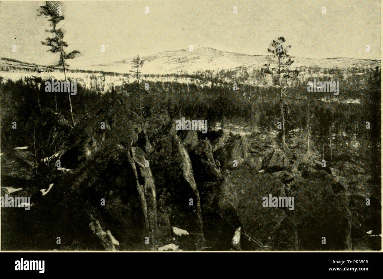 . Acta Soc. pro Fauna et Flora Fennica. Natural history. Acta Soc. Fauna et Fl. Fenn., 39, N:o 6. C. Finnild. Tavla I.. Salla 26. V. 1914. Foto C. F. Bild 1. Rohmoiva fjall (674 m) sett frdn Sallatunturi. I bakgranden synes barr- och bjorkskogsgrdnsen.. Please note that these images are extracted from scanned page images that may have been digitally enhanced for readability - coloration and appearance of these illustrations may not perfectly resemble the original work.. Societas pro Fauna et Flora Fennica; Societas pro Fauna et Flora Fennica. Acta Societatis pro Fauna et Flora Fennica. Helsink Stock Photo