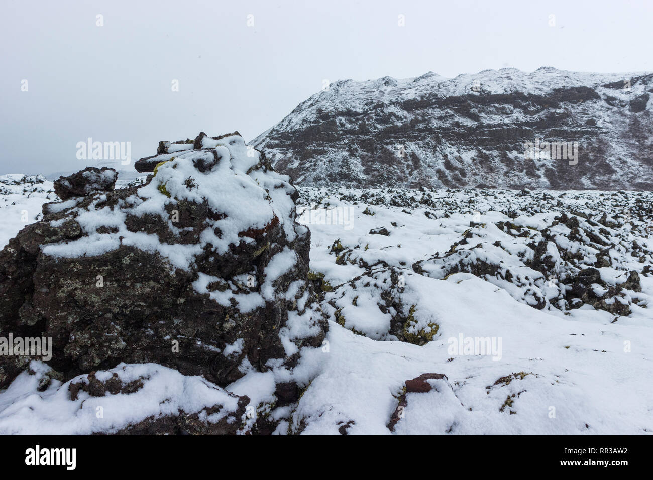 Lava field in a blizzard at Reykjanes peninsula, Iceland, Europe - Stock Image