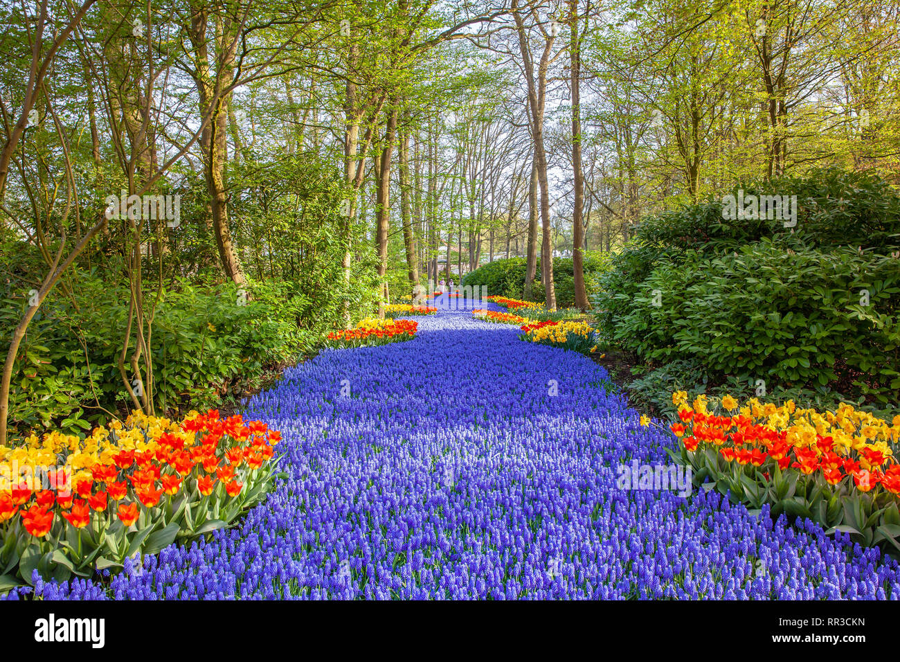 Keukenhof Famous Colorful Flowers Gardens Lisse Netherlands Stock