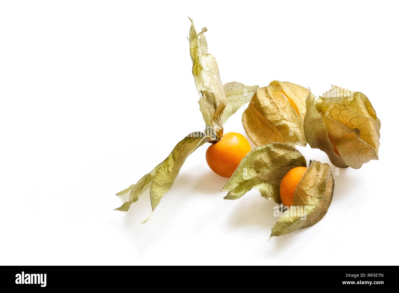 Physalis Cut Out Stock Images & Pictures - Alamy