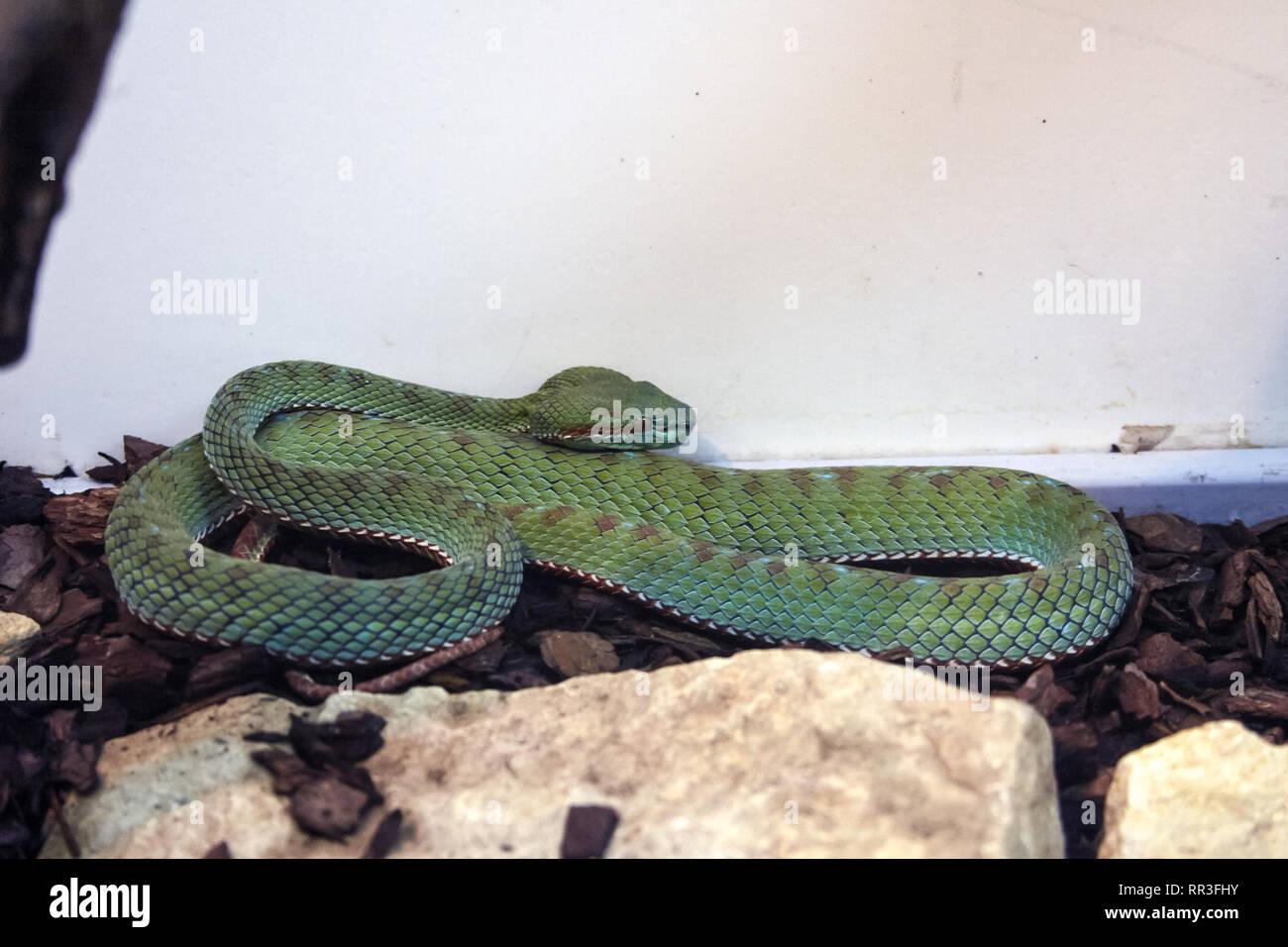 Vivarium Snake Stock Photos Vivarium Snake Stock Images Alamy