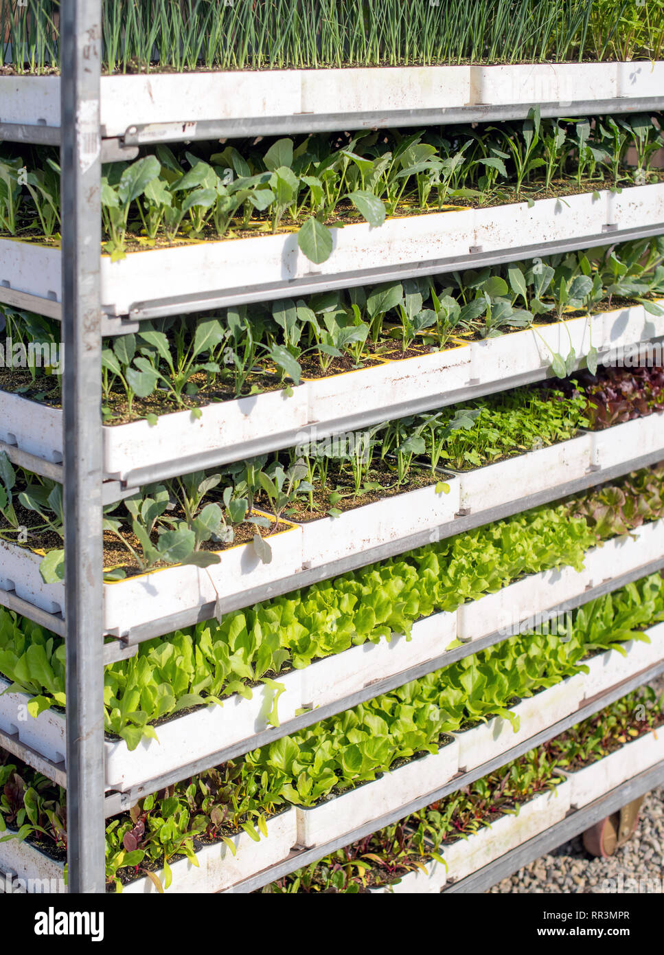 Cart with shelving loaded with assorted small potted plants for sale in a nursery in a close up view - Stock Image