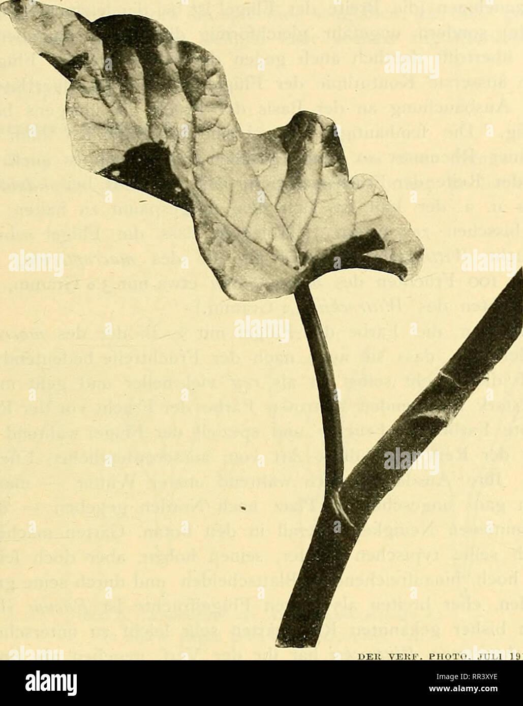 Antiquitäten & Kunst Bilder & Drucke LiebenswüRdig Bild Gewölbtes Glas Stoffblumen