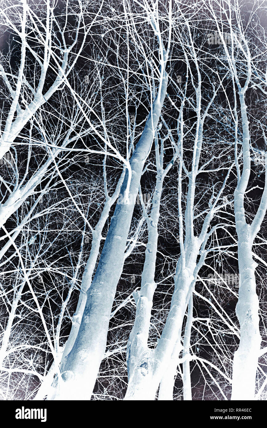 pattern of trees with bare branches inverted image effect - Stock Image