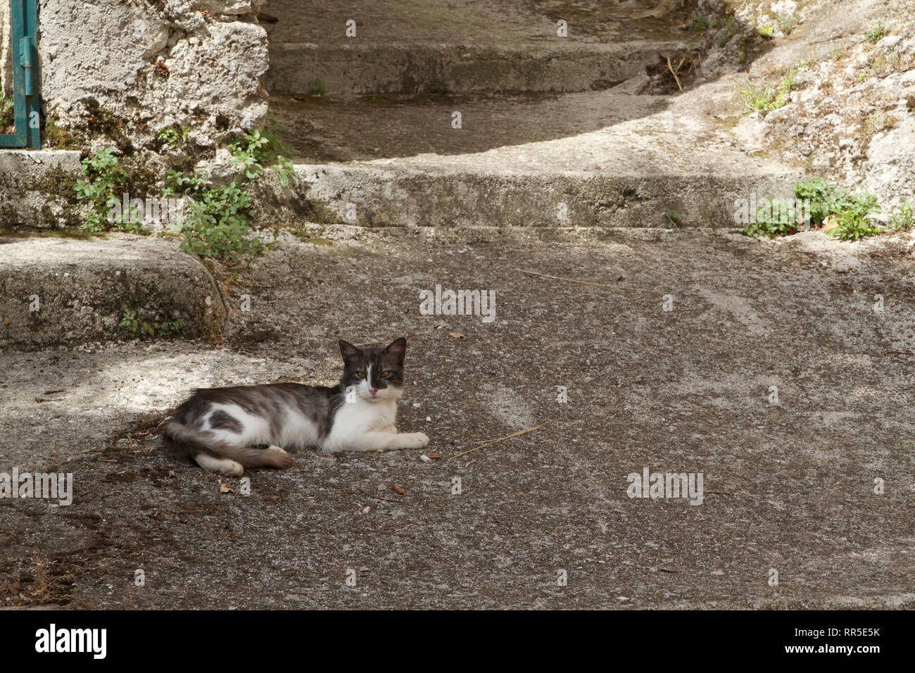 Alvito-Gray and white cat resting on the steps - Stock Image