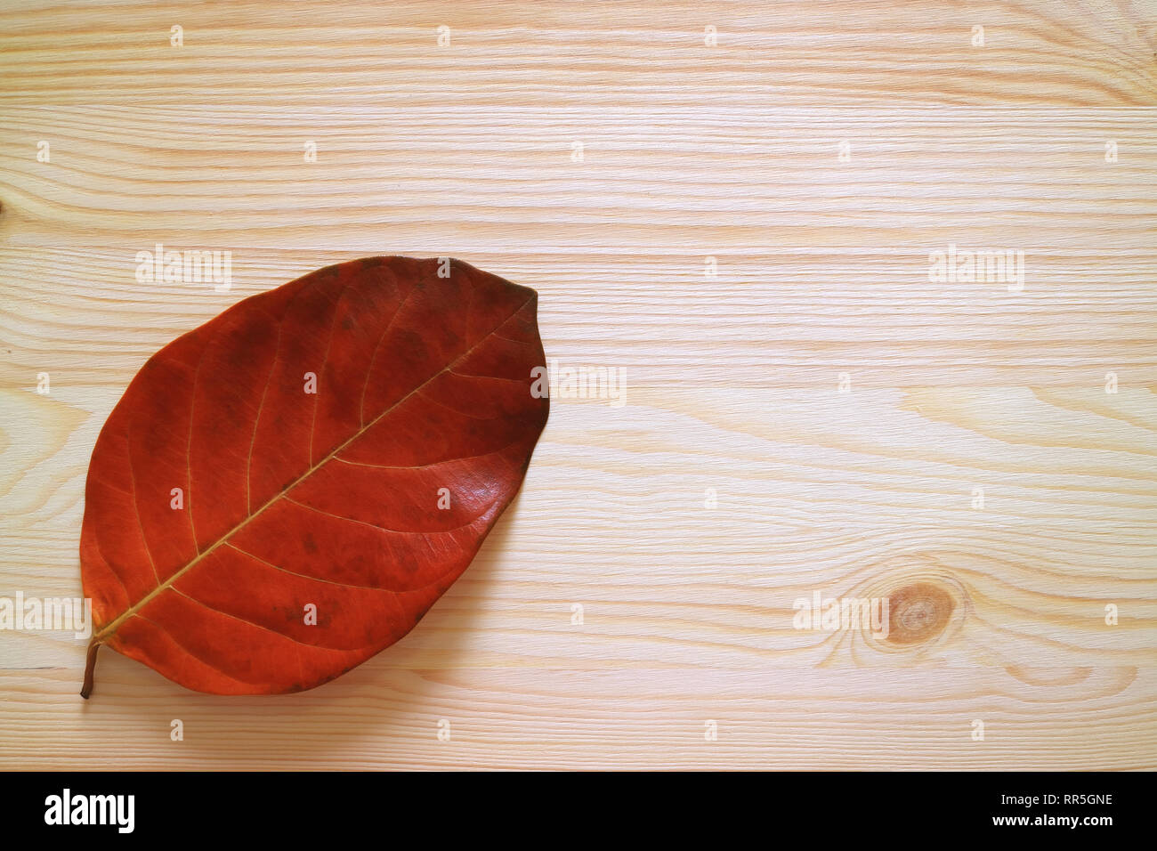 Red autumn leaf isolated on light brown wooden table with free space for text or design - Stock Image