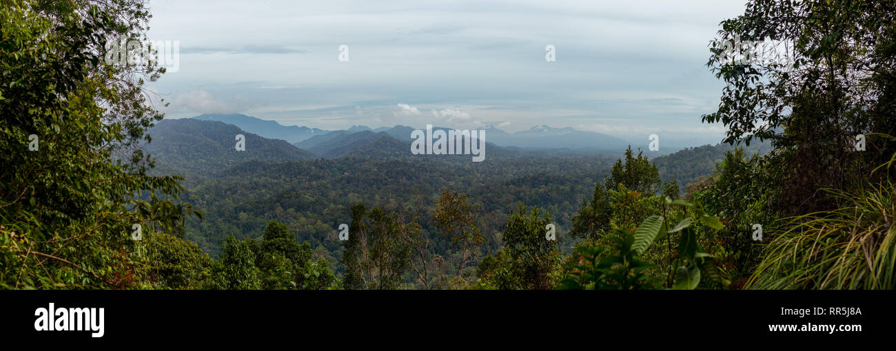Panorama view trough forest opening of the Taman Nagara national park, Malaysia. - Stock Image