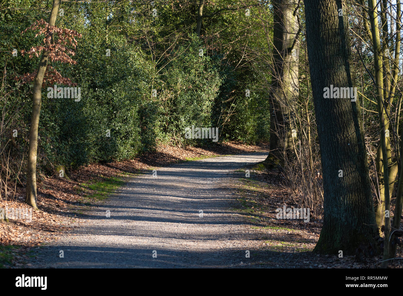 Bending gravel trail in a spring forest - Stock Image