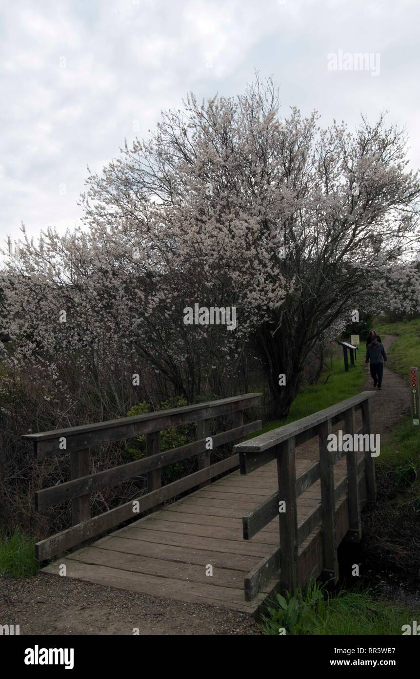 This is the start of the path to the top of Ring Mountain in Marin County. In springtime there are many plants that bloom. - Stock Image