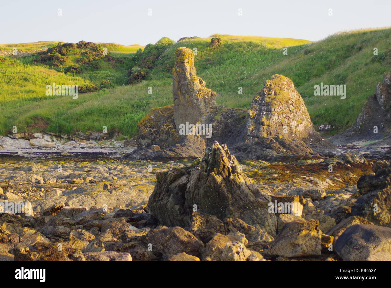 Rock and Spindle, Volcanic Neck Intrusion Sea Stack along the Fife Coast near St Andrew's, on a Fine Summers Evening. Scotland, UK. - Stock Image