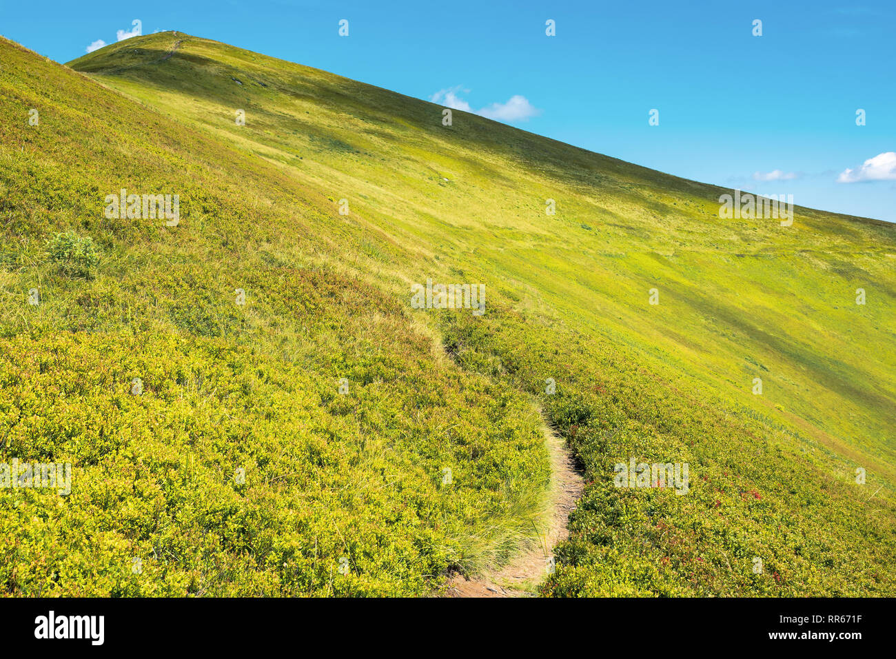 wonderful sunny scenery in mountains. grassy alpine meadow with foot path winding uphill. blue sky with fluffy clouds. beautiful carpathian landscape - Stock Image