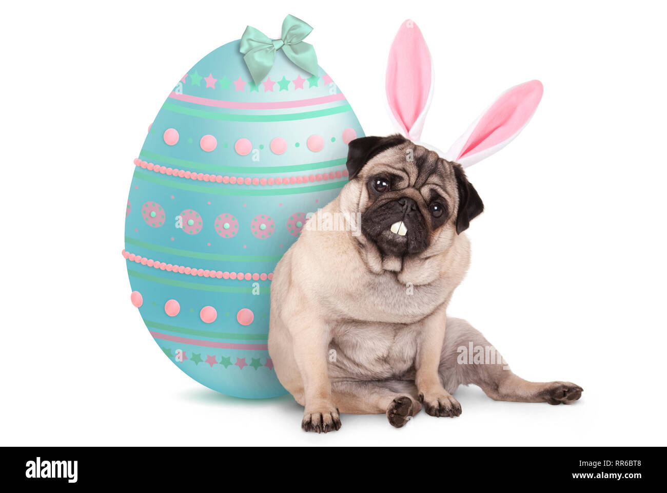 adorable cute pug puppy dog sitting down next to pastel colored easter egg, wearing bunny ears and teeth, isolated on white background Stock Photo