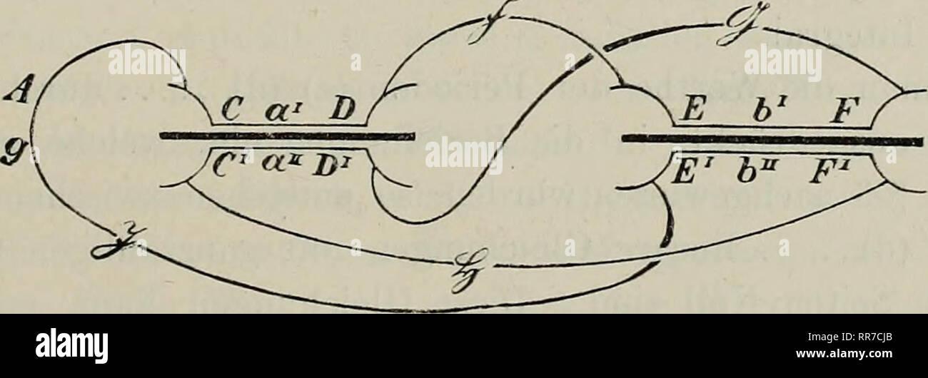 . Abhandlungen der Königlich Bayerischen Akademie der Wissenschaften. 351 selben Weg genommen, auf den r sich bezieht; es sei mit T bezeichnet. Der Coefficient von r dagegen ist obiges Integral über den Weg von o erstreckt. Nennt man seinen Werth 2, so folgt also: J' = J 4- r ^ - a T II § 6. ^ Um die Anwendung auf die Perioden von j (/)(xy)dx zu machen, denkt man sich in T' den oben (Seite 343) beschriebenen Weg Wq durch- laufen und die Buchstaben nebeneinandergestellt, welche die Ufer der Uebergänge bezeichnen, in der Reihenfolge,, wie sie beim Durchwandern von Wo getroffen werden. In dieser  Stock Photo