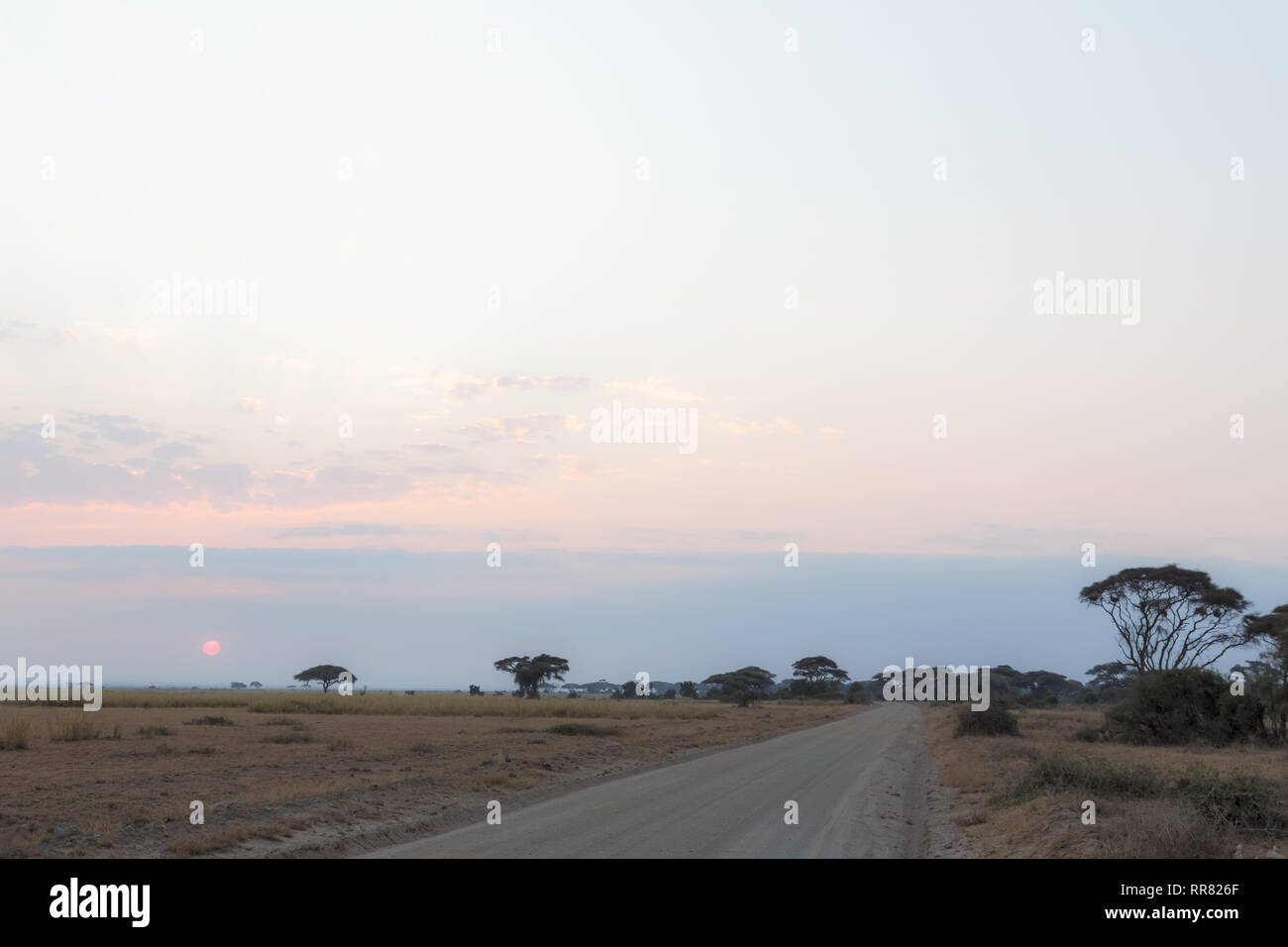 Sunset. Landscape in the Savannah Amboseli. Kenya, Africa (Rev.2) - Stock Image