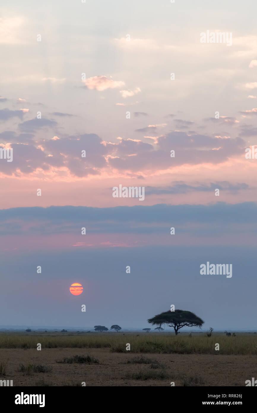 The road through the evening savannah. Kenya, Africa (Rev.2) - Stock Image