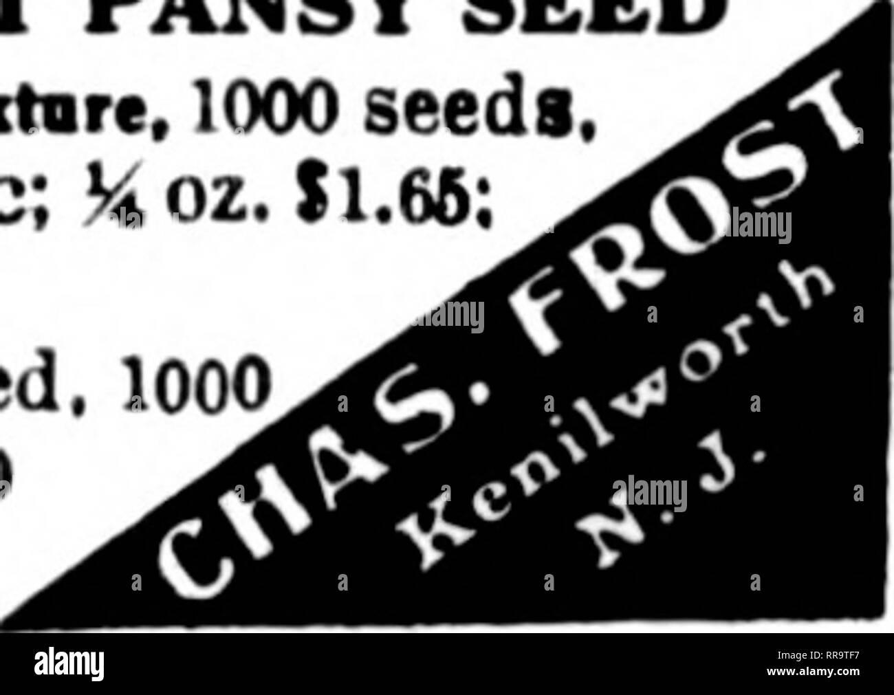 Snapdragon Giant Scarlet     500 Seeds