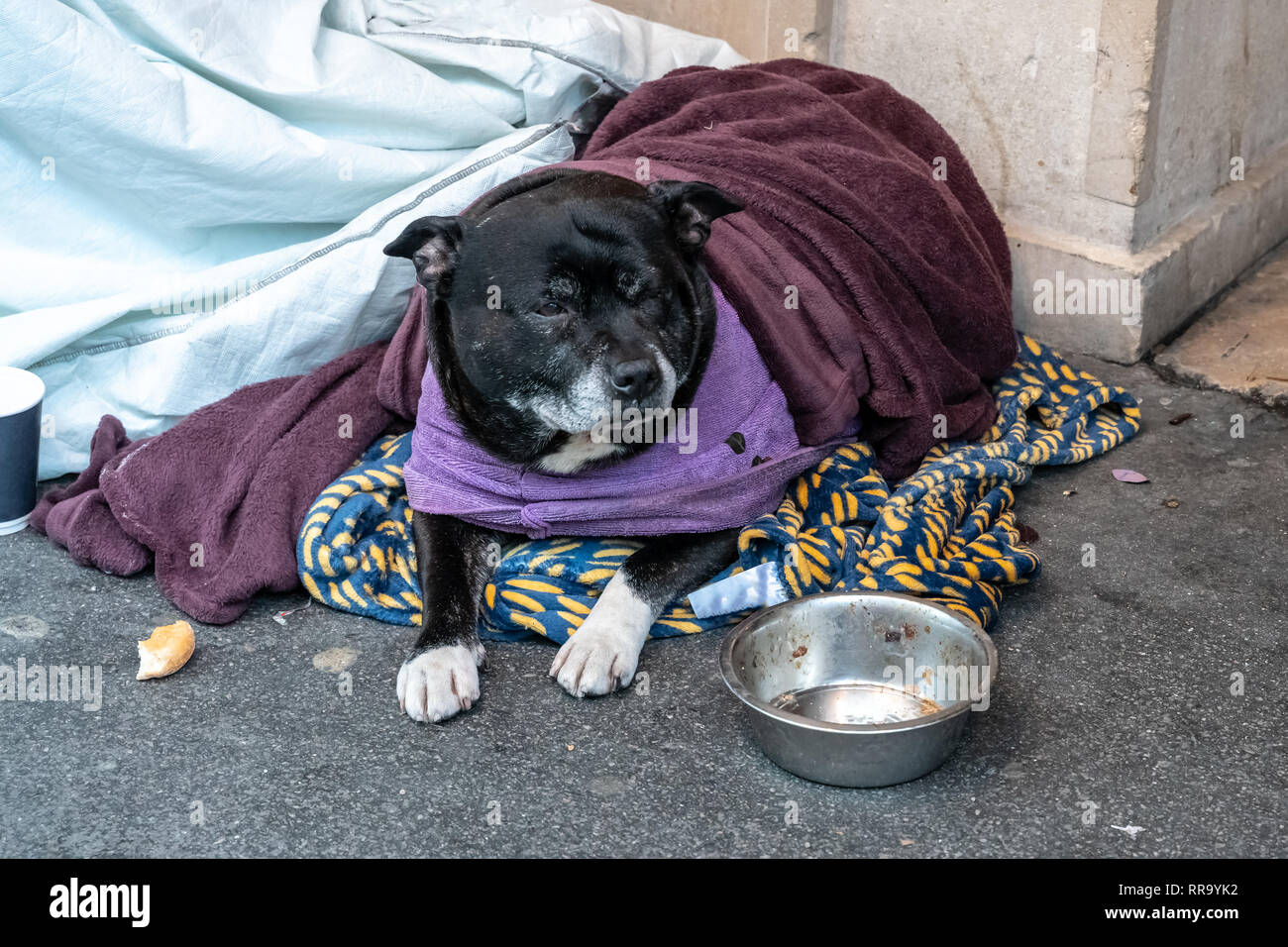 A homeless dog lying alone and depressed on the street feeling anxious and lonely in sleeping bag and waiting for food. The concept of homelessness. - Stock Image