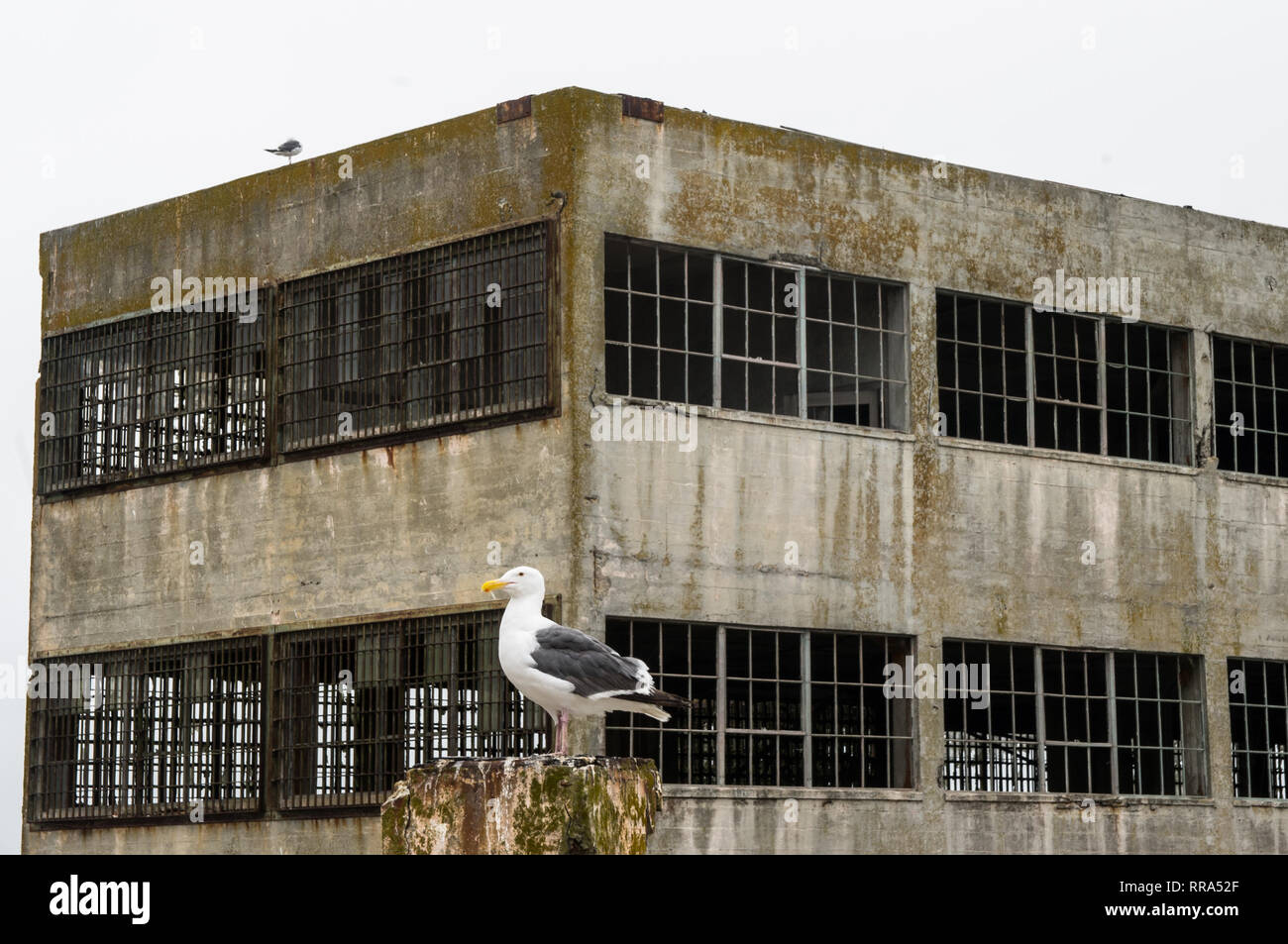 A seagull in front of Alcatraz Island Prison in San Francisco Bay Stock Photo