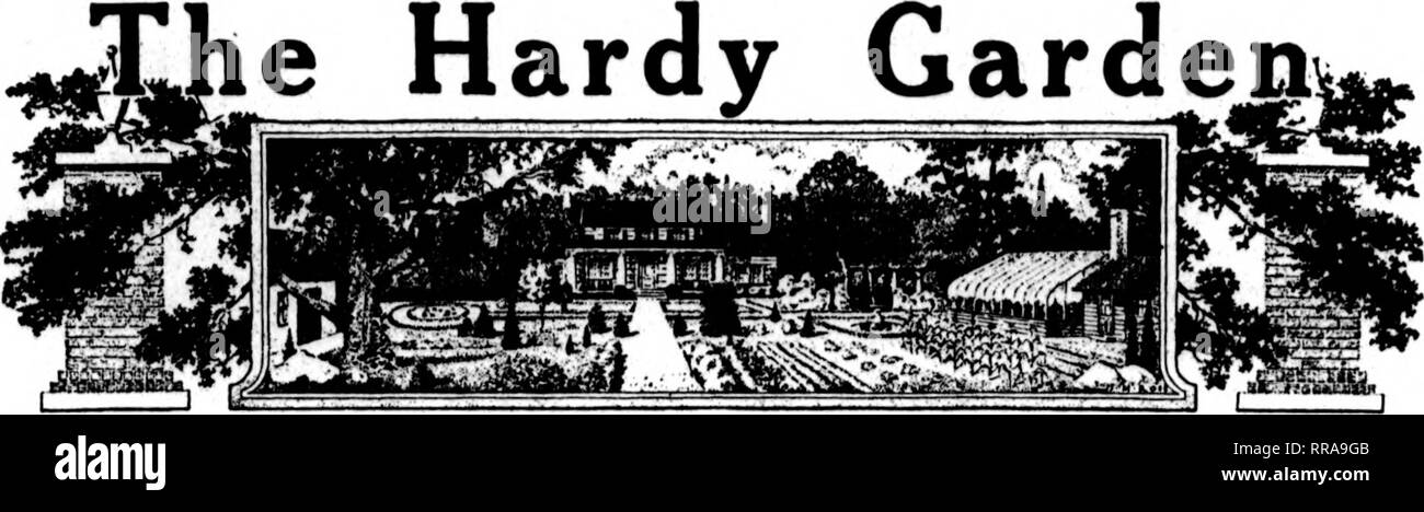 . Florists' review [microform]. Floriculture. Junk 8, 1922 The Florists^ Review 25. HEBBACEOUS FEBENNIALS. June, the Montli of Glory. June is the month of glory in the hardy flower garden. A wealtli of beau- tiful perennials are always in bloom at this season, such as delphiniums, aquilegias, lupinus, dictamnus, dian- thus, peonies, lieucheras, violas, cam- panulas, spiraeas, gypsophilas, linums, irises, potentillas, hemeroeallis, digi- talis, anchusas, armerias, coreopsis, geums, dicentras, Oenotheras, erigerons, pentstemons, polemoniums, stokesias and centaureas. There is opportunity for muc - Stock Image