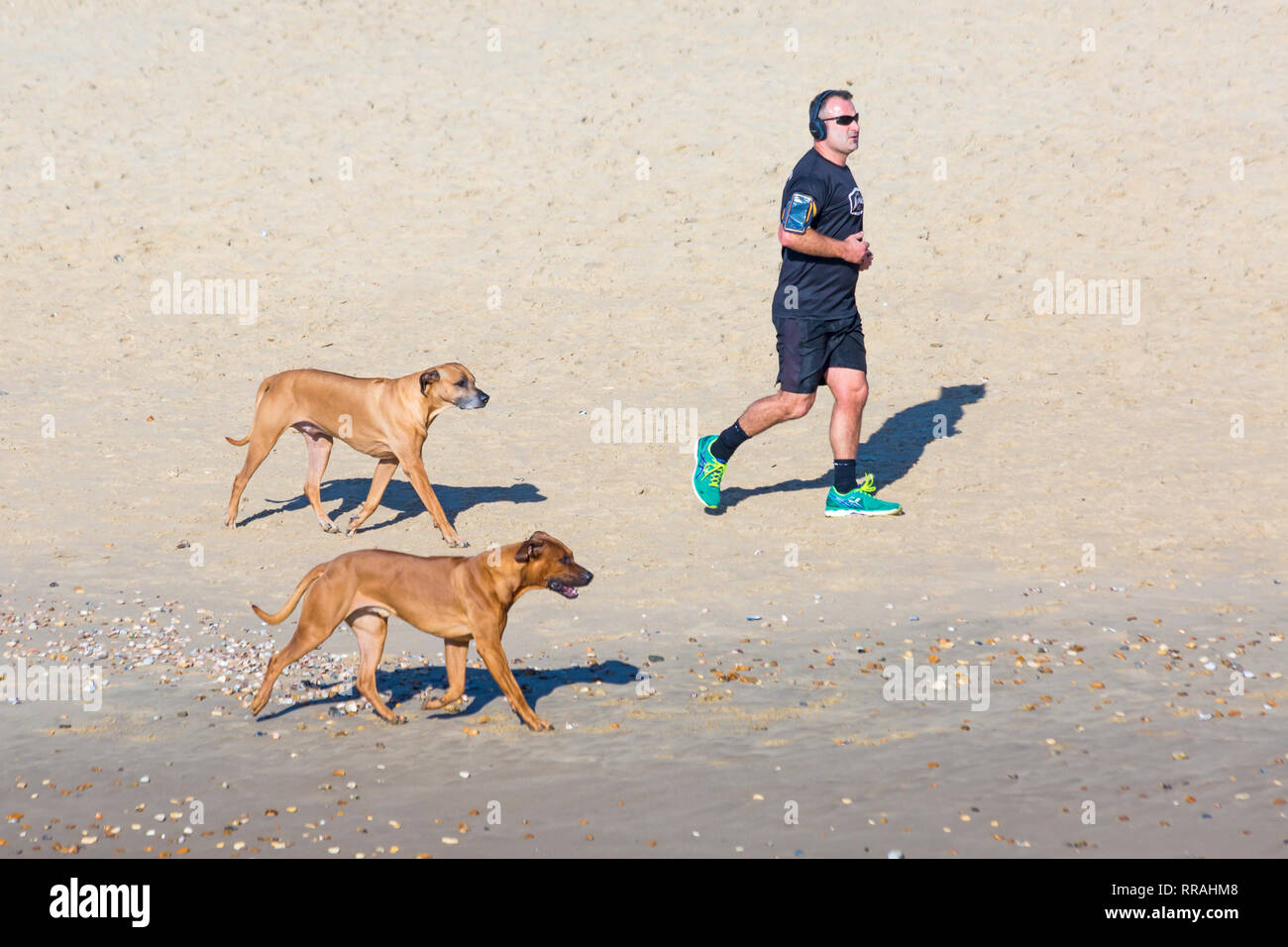 Bournemouth, Dorset, UK. 25th Feb, 2019. UK weather: another lovely warm sunny day at Bournemouth as visitors enjoy the sunshine at the beach on the hottest day of the year so far and hottest February day ever. Man running along seashore with dogs. Credit: Carolyn Jenkins/Alamy Live News Stock Photo