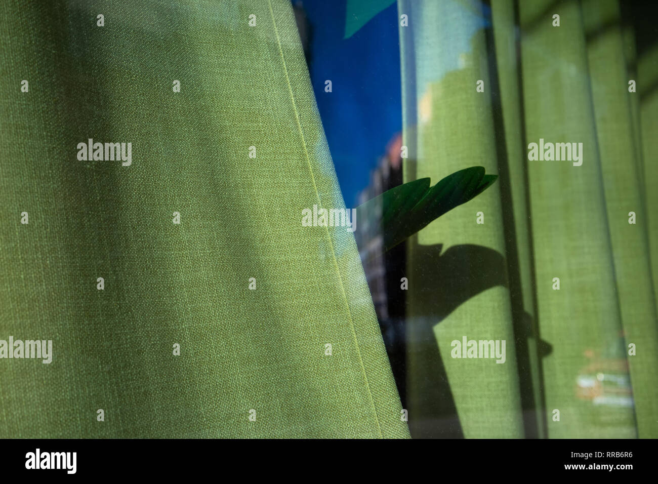 Plant leaf behind green curtains - Stock Image