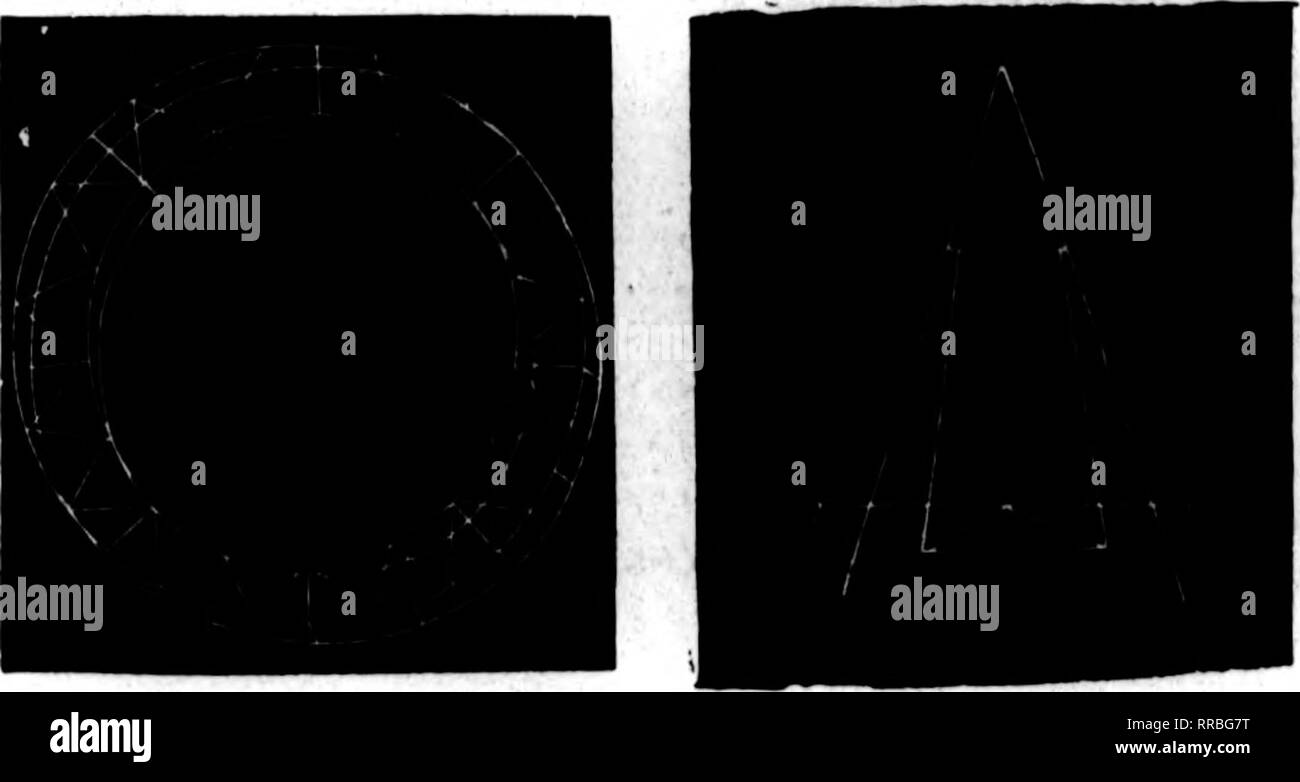 Blue Iris Black and White Stock Photos & Images - Alamy