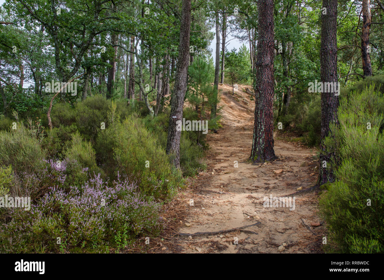 trail in the forest in provencal colorado park near rustrel town provence france - Stock Image