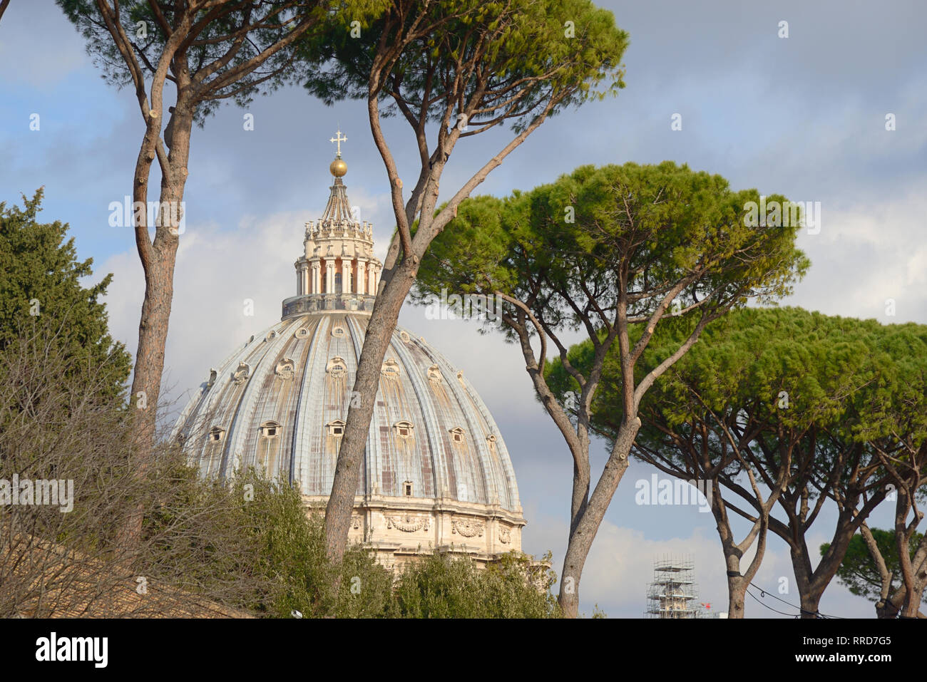 Dome of Saint Peter's Basilica Framed by Umbrella Pines or Italian Stone Pine Trees, Pinus pinea - Stock Image