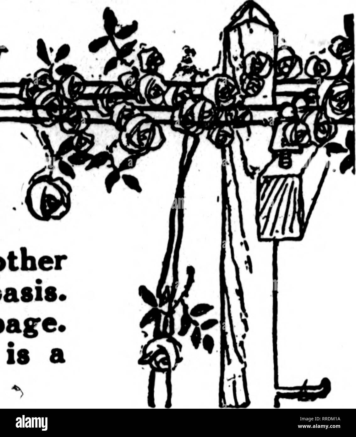 . Florists' review [microform]. Floriculture. Telegraph Deliveryjgfe^ ——?—Department THE florists whose cards appear in the Pink Part of The Florists' Review are prepared to fill orders from other florists, for local delivery, on the usual basis. See index by towns on the following page. If your city is not represented, there is a specially good opportunity for you.. We are all blind until we see That, in the human plan, Nothing is worth the making If it does not make the man. Why build these cities glorious If man unbuilded goes? In vain we build the world unless The builder also grows. —EDWI - Stock Image