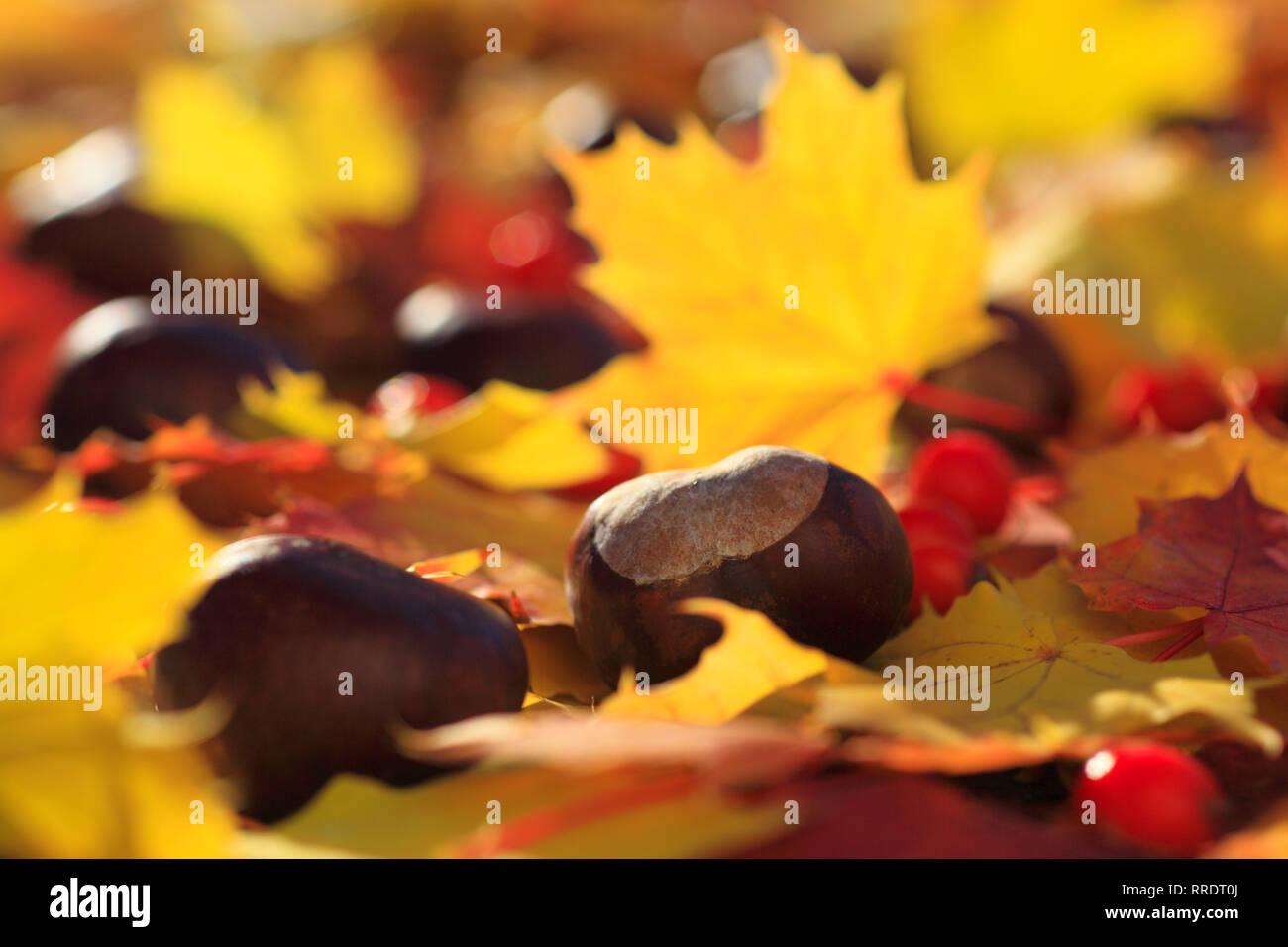 Autumn Scene Repro Postcard: Fall Forest Yellow /& Orange Leaves Gold