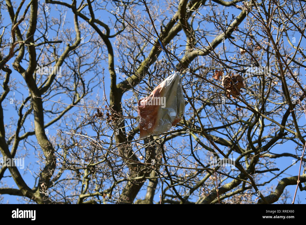 Large crisp packet in the branches of a tree. Spring growth on budding tree, Essex, UK. - Stock Image