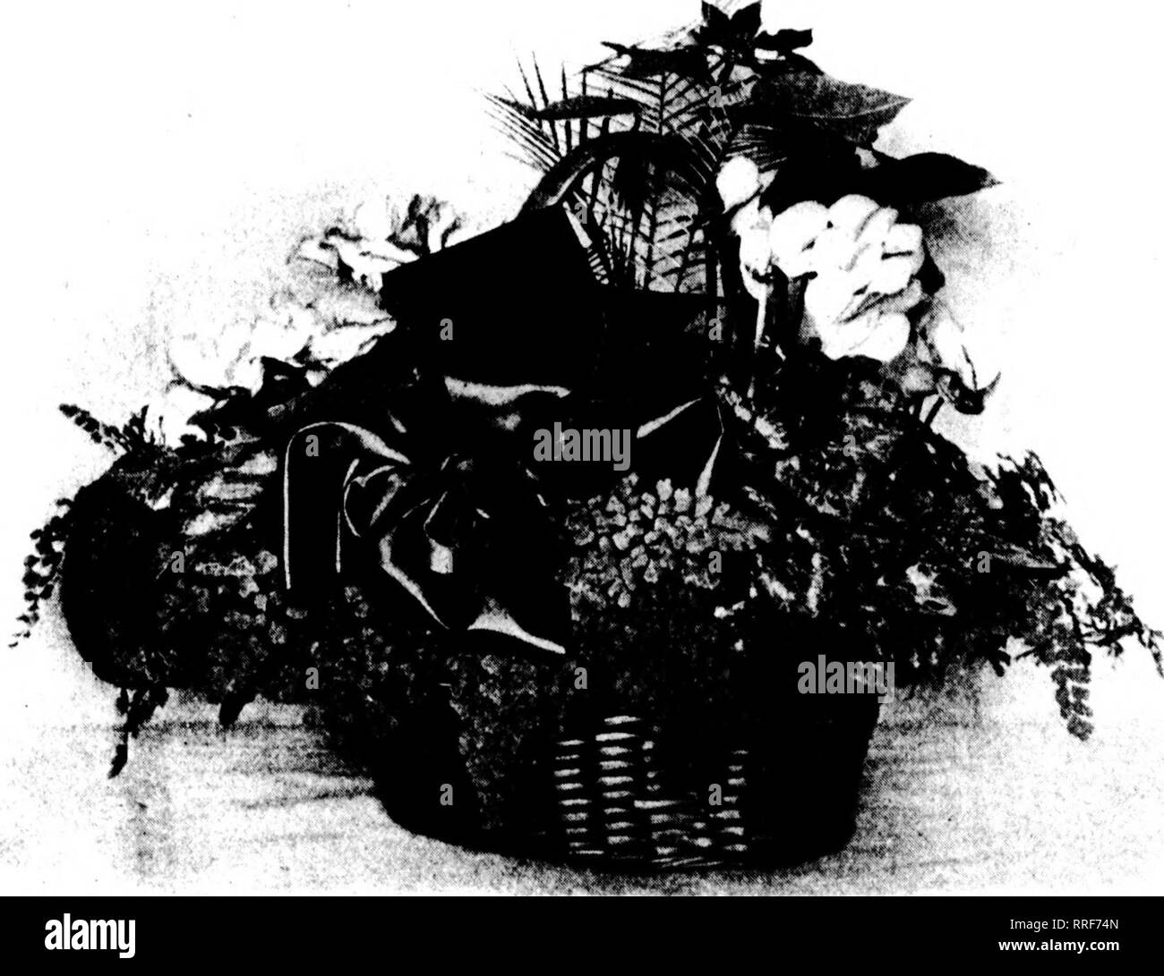 . Florists' review [microform]. Floriculture. 38 The Florists* Review Dbcembeu 9. I'jaO. More Popular Year by Year, the Cyclamen Is Now Indispensable. villi iln iH't >cll ;ill your plants . rt'incmhcr lliat they can be kept, ir ncrcssnry, for tliirr iiKnitli-- ;jii(l tliat thiy can even he kept in proscntaMc rendition for an Kaster a- earlv as -a r >)iall liaxc in ll'L'l. Begonias. I>e>;iiniii^ ? enie next In cyrlann n^ in favor. Mor( of tlicni may lie solii than of cyclaiiK ii.s, Init, vvliilc tliey may cati a jireater (irofusion of flowers, the have loss variety of colorines at - Stock Image