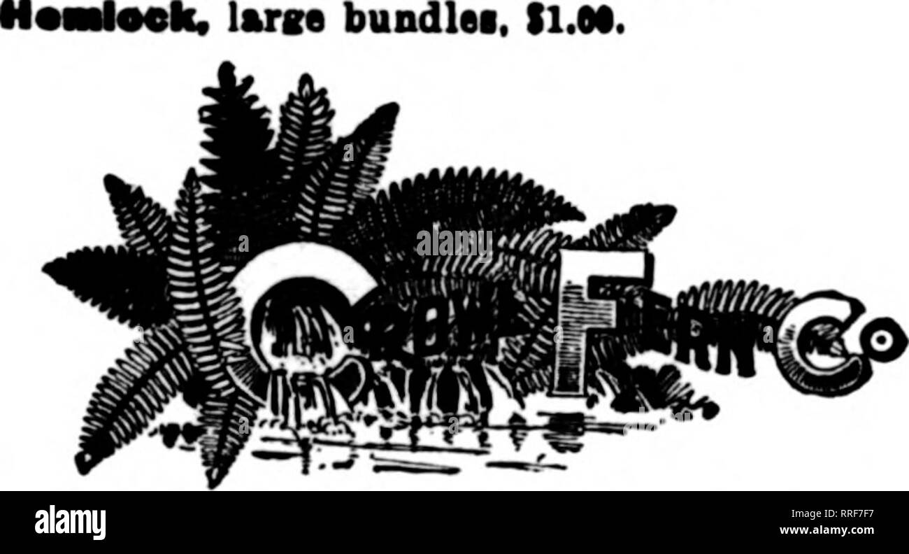 . Florists' review [microform]. Floriculture. JOSEPH ZISKA & SONS WIRE DESIGN SPECIALISTS WRITE FOR PRICES 175 N. Wabash Avenue CHICAGO, ILL. FLORISTS' SUPPLIES Extra Long* Fancy and Dags®' FERNS Gathered Fresh Daily from the Woods tawral P«stooaliiK. Fnib itook aupDlied on ?hort notice; uuIt for yonr weddinga and other limiUr decorationa; nothing better. iMM ??•••, 16.00 per large bkle. Pin*. 12c per lb. L«T>I, large bundlea, SOo. large bundlea, ll.OO.. t Telcffaph Addrew, New Salem. Maaa. Poat OiBoe and L. D. Phone Addreaa MILLINGTON, MASS. Ferns - Galax - Laurel Bronxe Galax per 1000 - Stock Image