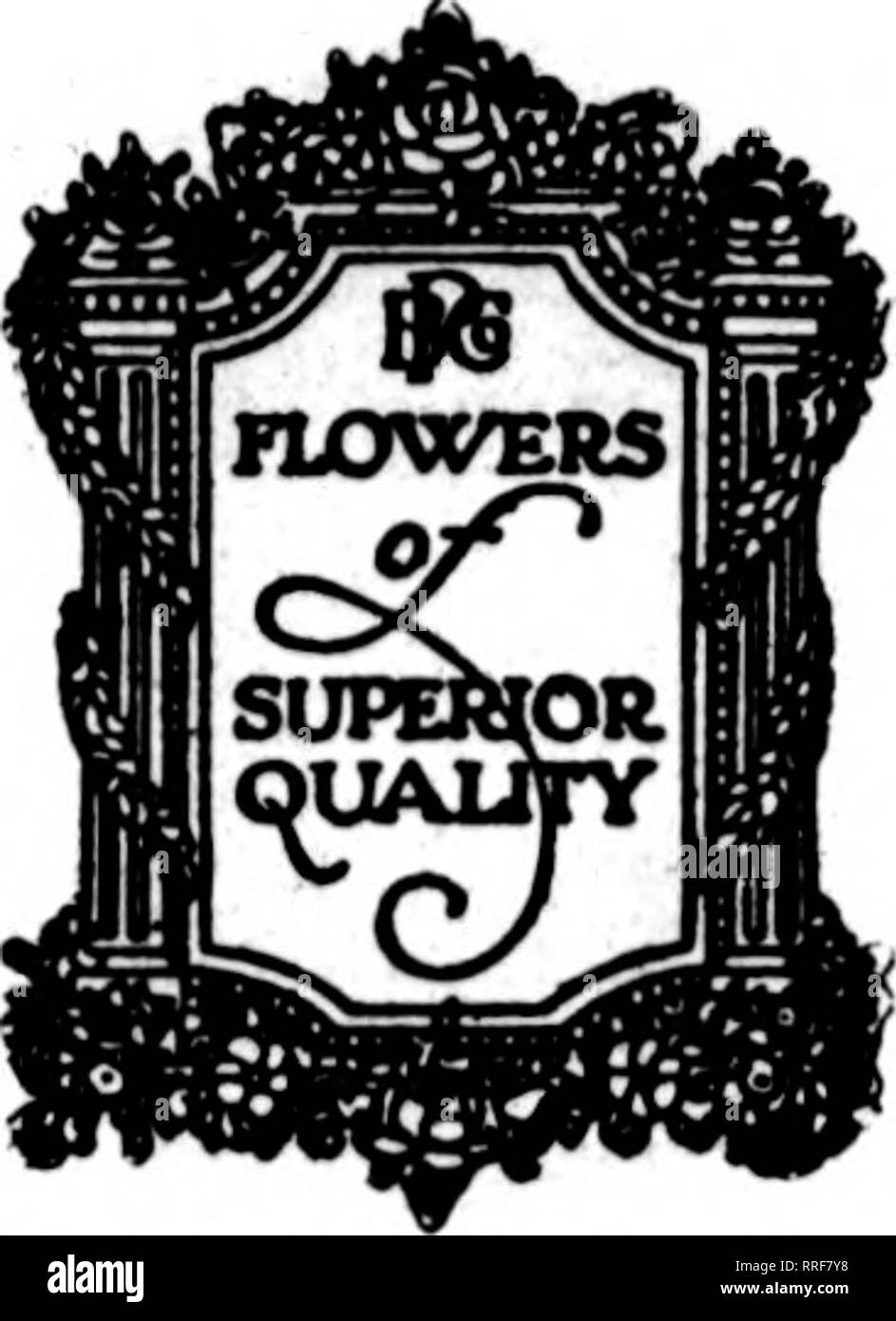 . Florists' review [microform]. Floriculture. Mabch 24. 1921. The Rorists^ Review. Use Poehlmann's VALLEY CATTLEYAS WHITE ROSES SWEET PEAS FARLEYENSE ADIANTUM For Your Spring Weddings POEHLMANN BROS. CO., Long Distance Phone Randolph 35 CHICAGO f)H t<i 74 East Randolph Street -'^ i.-^^' ? vt.: The Latgeat Growers .?^.^^'' of Flow^f in the l^orld. Please note that these images are extracted from scanned page images that may have been digitally enhanced for readability - coloration and appearance of these illustrations may not perfectly resemble the original work.. Chicago : Florists' Pub. Co - Stock Image