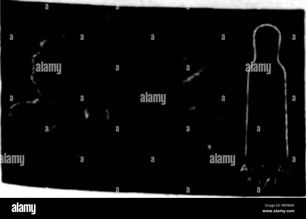 Split Rock Black and White Stock Photos & Images - Alamy