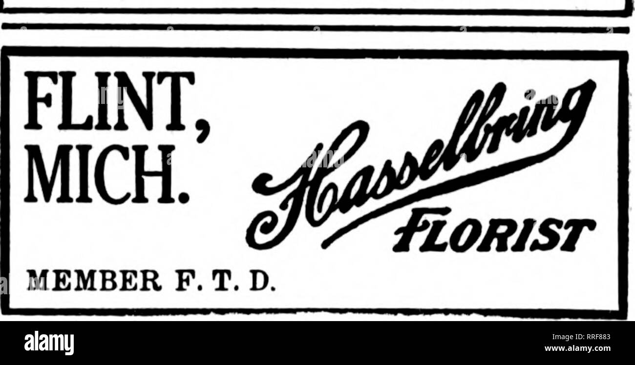 . Florists' review [microform]. Floriculture. !^-v?-c^«,?a>.-itf ^e-r^.c C-0--*<-;0'-1 DETROIT Orders given best of care Ly these live F. T. D. Members J. Breitmeyer's Sons 1614 Broadway Fetter's Flowers 39 Adams Avenue E. Scribner Floral Co. 27-10 East Fort St. G. H. Taepke Co. W.M.TFJt G. TaKI'KE, 2730 Elm wood Ave. The L. Bemb Floral Co. Aliskkt Pi)(iiEi.()N', 815 Bates Street Yours For More Co-operation DETROIT, MICH. Harry EL Taylor Highland Park Florid 12135 Woodward Ave. Member F. T. D. DETROIT, MICH. Peter F. Reuss & Co. 1452 BROADWAY Detroit, Mich. ??o^Sl CO. Member F. T O.  - Stock Image