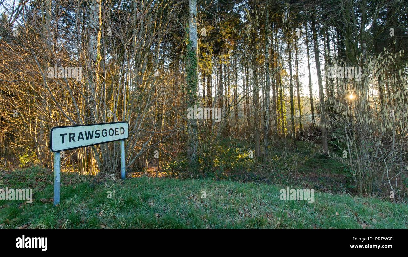 Trawsgoed, Ceredigion, Wales, UK 26th February 2019 UK weather: Another bright sunny morning after record breaking temperatures in Trawsgoed, Ceredigion, Wales. As the sun shines through Black covert forest. Credit: Ian Jones/Alamy Live News - Stock Image