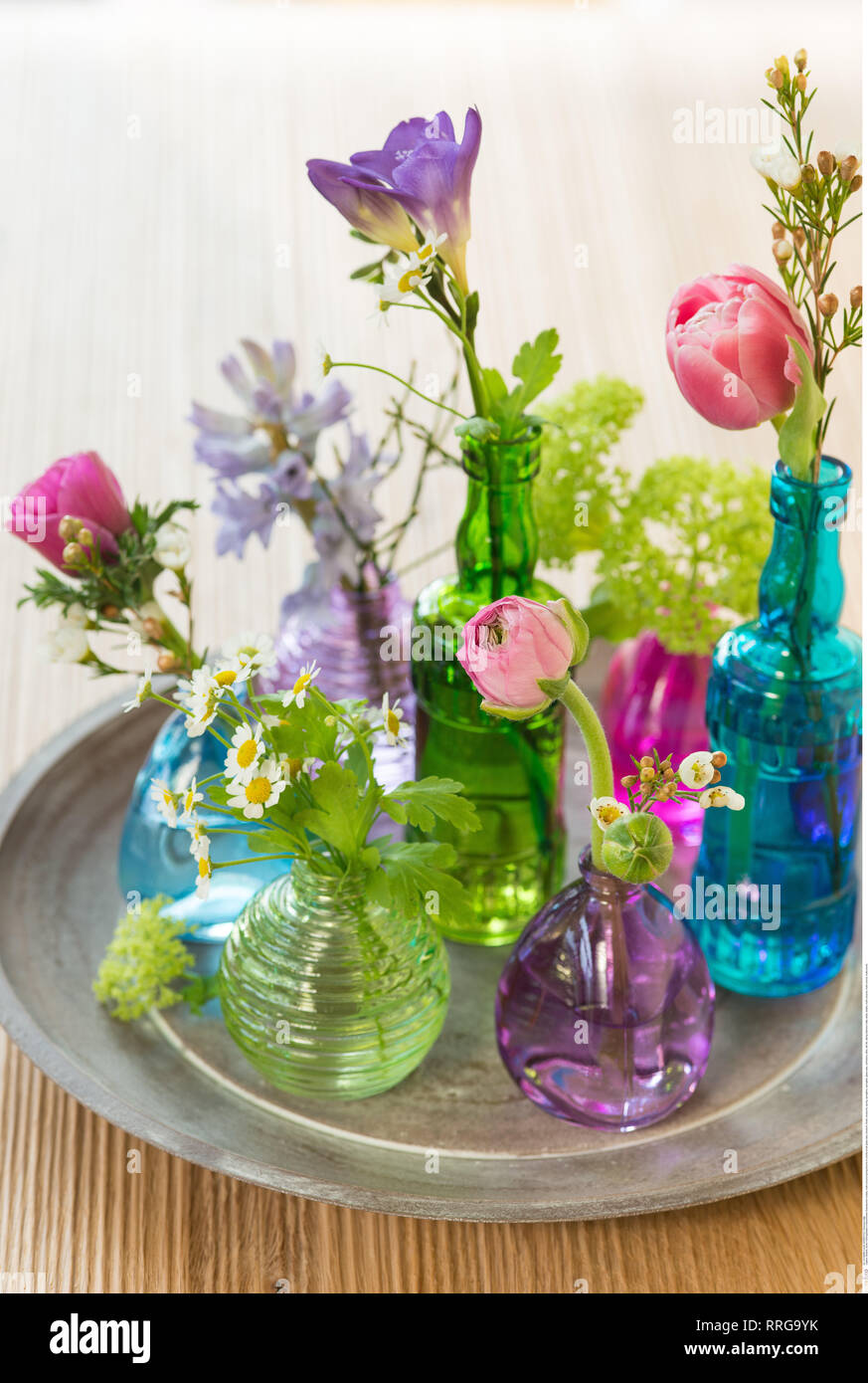 botany, multi-coloured spring blooms, Caution! For Greetingcard-Use / Postcard-Use In German Speaking Countries Certain Restrictions May Apply - Stock Image