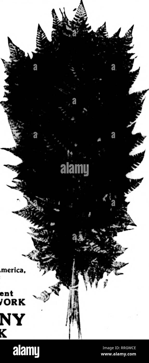 Enchantress Black and White Stock Photos & Images - Alamy