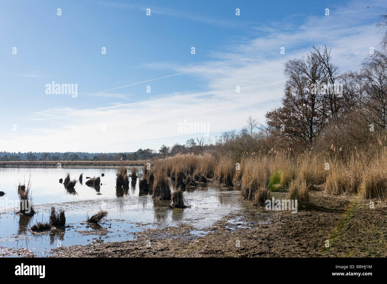 Water shortage at a lake at 'Cartierheide' in winter, due to 2018 summer drought and a dry winter - Stock Image
