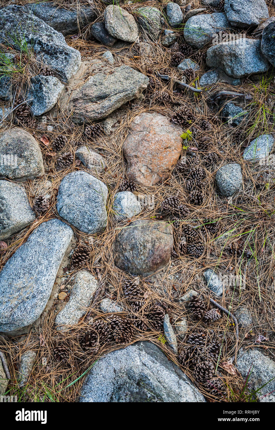 Pine needles and pine cones lying among the rocks and sticks on the ground.  Washington Cascades, USA. - Stock Image