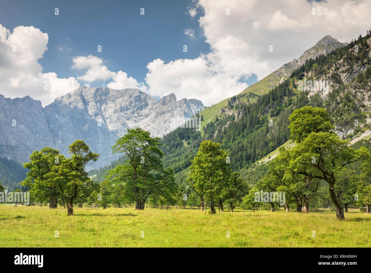 Grosser Ahornboden, maple trees, Karwendel mountains, nature reserve, Eng, Hinterriss, Tyrol, Austria, Europe - Stock Image