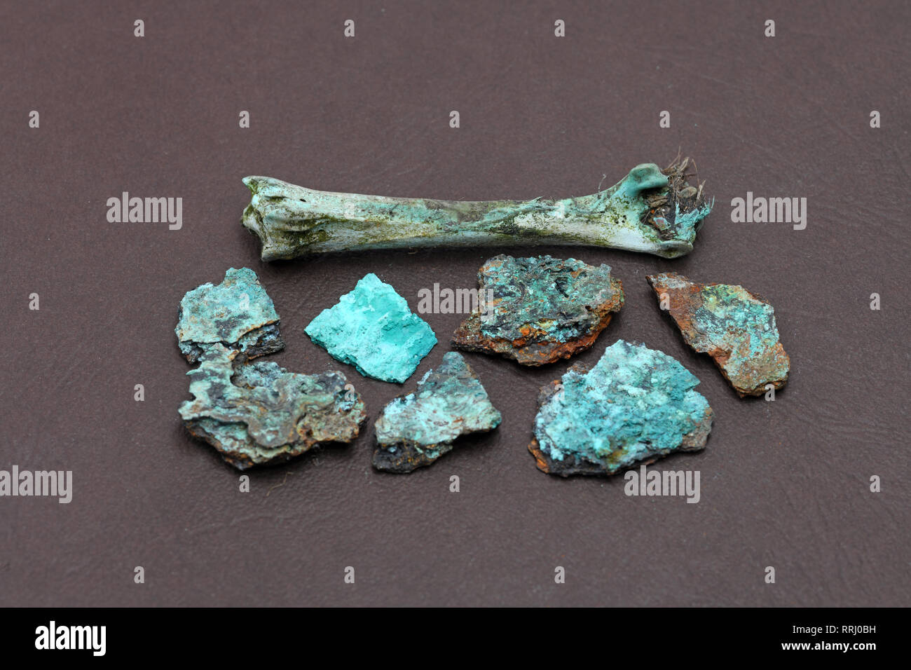 Samples of a bird bone and pieces of metal that have been impregnated with copper waste products that have leached into the soil - Stock Image