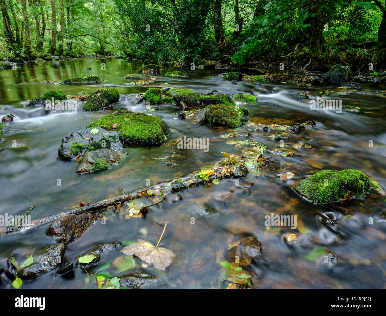 Mossy and wet rocks along with autumn colours surrounding the River Bovey, Dartmoor National Park, Bovey Tracey, Devon, England, United Kingdom - Stock Image